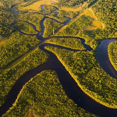 The Brazilian Amazon.