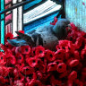 Pigeon steals poppies to make its home at the Australian War Memorial