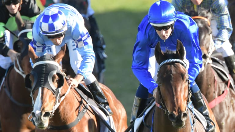 Stepping up: Oriental Runner, left, finishes second to Intuition in a benchmark 79 at Randwick on August 4.