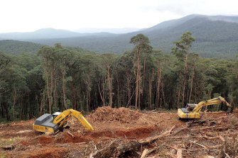 Land clearing destroys native habitats and is a major driver of animal extinctions.