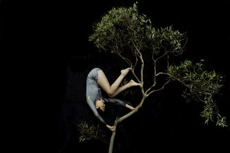 Tamara Dean's Tumbling Through the Treetops (2020) from the series In isolation.