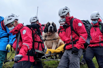 Sixteen volunteers from Wasdale mountain rescue team take turns to carry 55kg Daisy from England's highest peak, Scafell Pike.