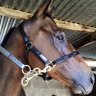 How racehorse Only Money went from the NSW tracks to a Queensland abattoir