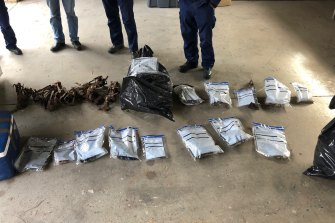 Four properties in Tubbut and Orbost in East Gippsland were raided by authorities after the destruction of almost 140 wedge-tailed eagles. Native animal skulls were seized.