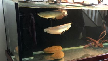 A fish tank inside the home searched by police.