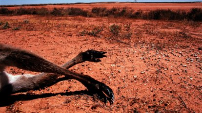 Morrison government experts say Australia must 'do more' on climate