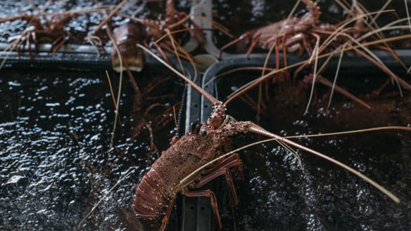 Industry have responded fiercely to the lobster plan.