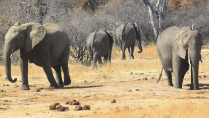 Win for endangered animals at global wildlife conference