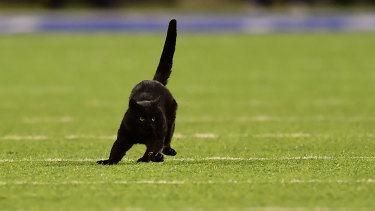 A black cat runs on the field during the second quarter of the New York Giants and Dallas Cowboys game at MetLife Stadium in East Rutherford, New Jersey.