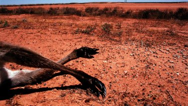 As the driest inhabited continent on earth, Australia is particularly vulnerable to the effects of planetary warming.