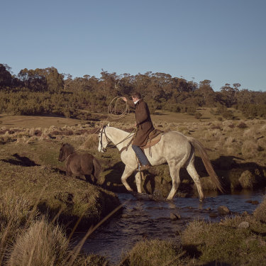 Professional horse-breaker Lewis Benedetti emerges from the Nunniong Plains bush with a wild colt.