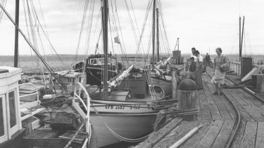 Couta boats lined up at the San Remo Fishersman's Co-operative in the early days.