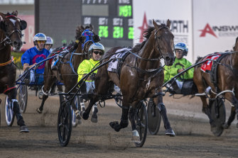 Luke McCarthy drives King Of Swing away to win the Allied Express Sprint at Menangle last Saturday