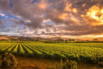 The Barossa Valley in South Australia would be a great escape from Melbourne right about now.