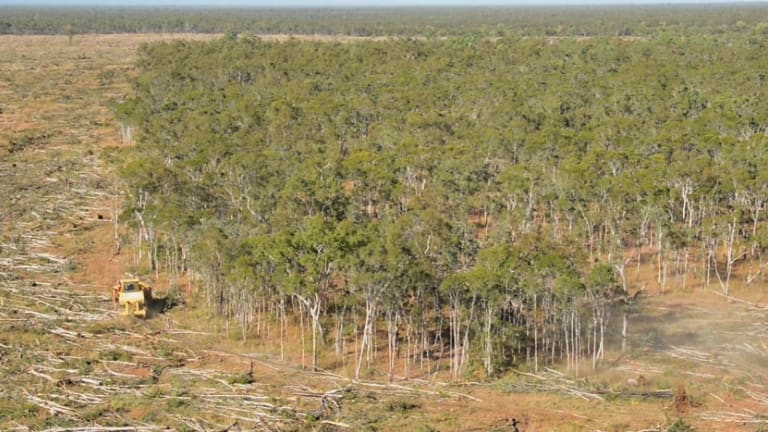 """""""Within three years clearing rates of remnant native vegetation in Queensland increased from 59,800 hectares in 2012-13 to 138,000 hectares 2015-16,"""" Dr Anthony Lynham told parliament."""