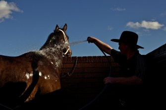 Nowra Cup Day shifts to Goulburn this year with an eight-race card set down for Sunday's meeting.