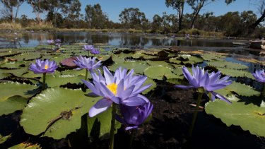 Doongmabulla Springs, which scientists say may be destroyed by the Adani coal mine.