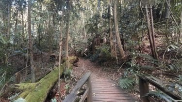 Mount Glorious National Park in the Moreton Bay region.