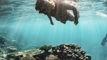 'We will fight': Oil and gas move off Ningaloo shocks protection groups