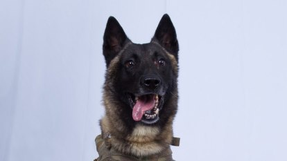 US hero dog wounded in Baghdadi operation shall go unnamed for now