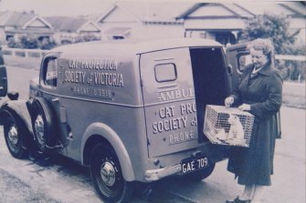 Helen Allchin pictured in 1953 with a Cat Protection Society of Victoria ambulance.