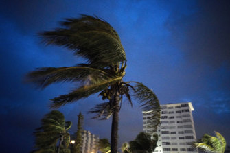 Strong winds move the palms of the palm trees at the first moment of the arrival of Hurricane Dorian in the Bahamas.