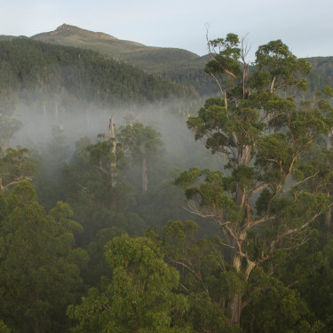 "The Styx Valley in southern  Tasmania. Without climate action by 2030, ""we walk into a world in which you have this cascade of tipping points of many different ecosystems,"" says former UN  climate chief Christiana Figueres."