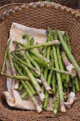 Freshly-picked asparagus