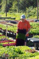Seedlings at Patio Plants.