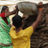 Cow dung is no cure for COVID, Indian doctors warn