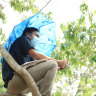 El Salvador student takes to treetops to pick up signal for online classes