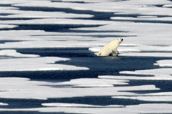 The Arctic is suffering dramatic loss of sea ice.