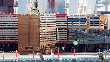 Sheep are seen being loaded onto the Al Kuwait live export ship in Fremantle harbour.