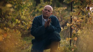 Grape expectations: Joe Pantoliano plays Marco Gentile, a businessman turned winemaker.