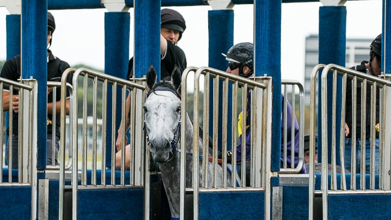 Going nowhere: Chautauqua refusing to jump in a barrier trial at Randwick in February.