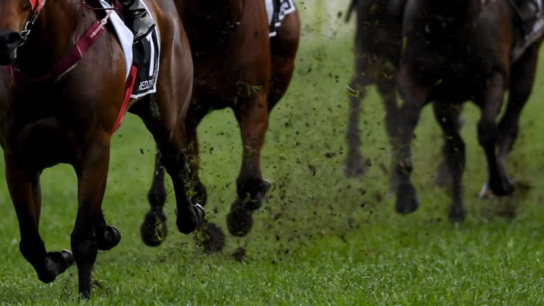 Mud and guts: A   heavy track is expected today at Armidale.