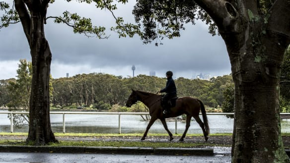Stay dry, Sydney: city braces for another seven days of rain