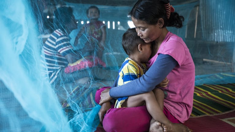 Infected mosquitoes in some regions of Vietnam and Cambodia have become resistant to traditional insecticides used in bed nets.