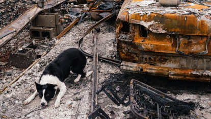 Out of the ruins come ashes, thanks to Piper the wonder-dog