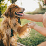 Research proves dogs really are our best, and oldest, friend