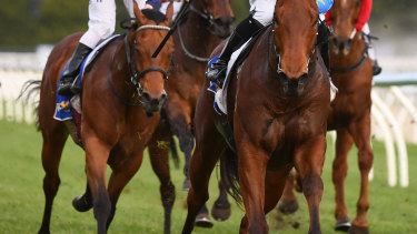Eight races are on the card at Moruya on Friday.