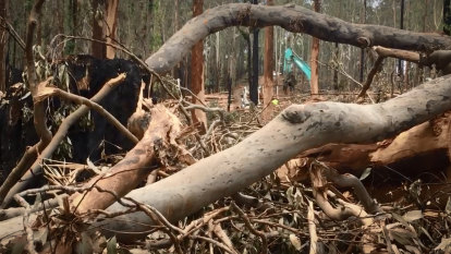 The state's environmental watchdog is muzzled on forests