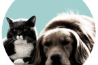 What are cats and dogs really thinking?