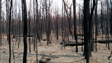 The Conjola National Park near the proposed housing site was severely burnt during last season's bushfires.