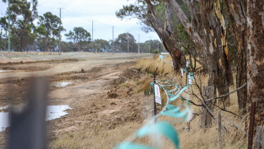 Djab Wurrung argue a tree, believed to be around 500 years old, is not within the Western Highway duplication project boundary and should not be cut down.