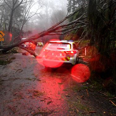 A fallen tree delays emergency service workers in Olinda.