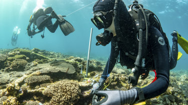 A recent research trip to Ningaloo.