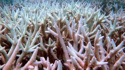 Bleaching risks rise for Australian coral reefs as warm seas forecast