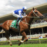 Country Championship favourite Noble Boy qualifies in nick of time