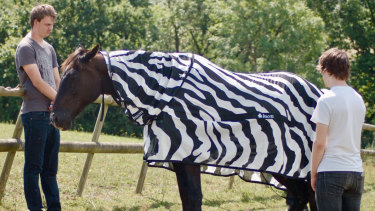 Scientists from the University of Bristol and the University of California at Davis, dressed horses in black-and-white Zebra type striped coats for part of their research.